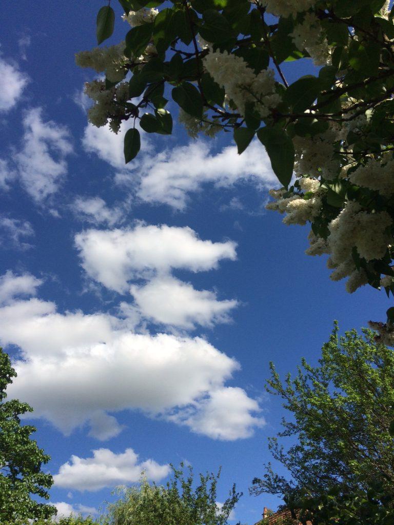Hervey Coin de ciel et coin de jardin 1