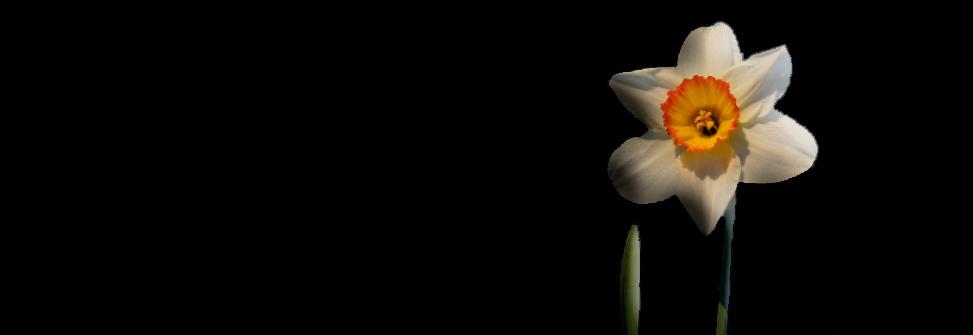 Hervey Fleur Narcisse